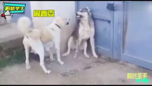 搞笑动物:熊猫妈妈爬树从上跌落,竟拿孩子当肉