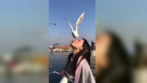 与海鸥来个亲密接吻,确定不是冲着食物去的?
