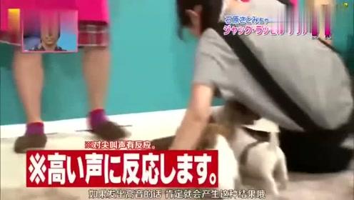 日本综艺节目,建议降低音量观看