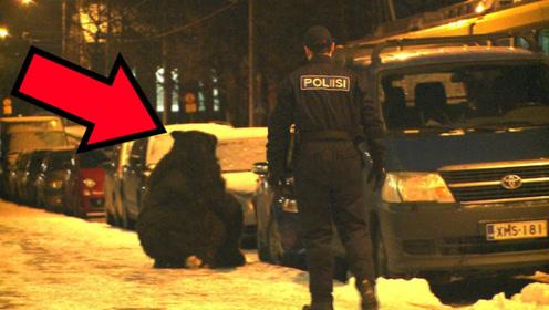 老外假扮巨型棕熊恶搞路人,结果被警察一眼识