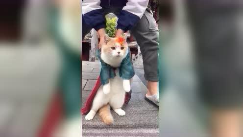搞笑动物这只猫咪太有才了,这是模仿的谁?
