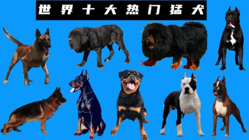 浅谈世界十大热门猛犬性格,个个都是狗中硬汉
