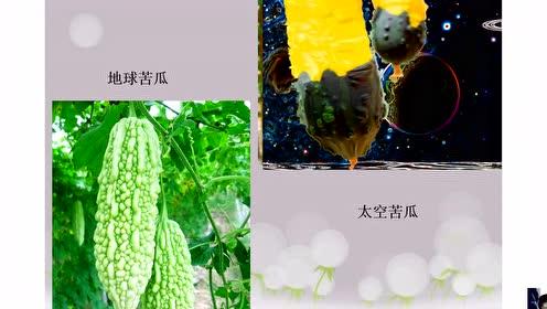 人教版一520快三美术下册第11课 太空里的植物