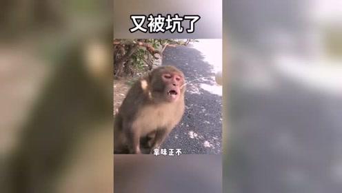 男子虐待动物,居然给猴子喝尿,请善待每一个
