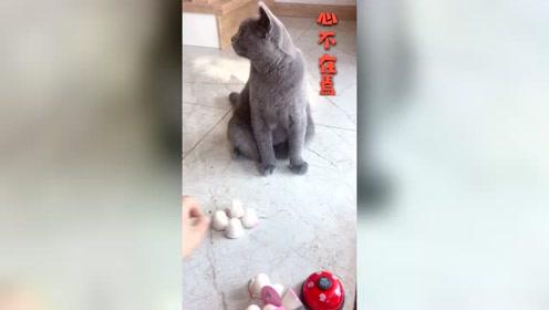 靠智商吃饭永远比靠体力来的更轻松猫咪