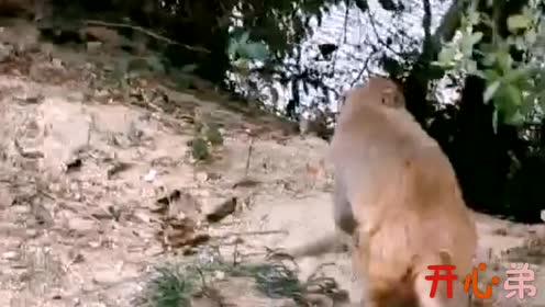 动物成精:这狗都买这么好的车?现在的动物混