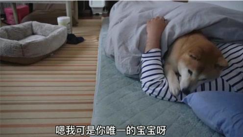 """柴犬想叫主人陪它玩,宠主却""""装睡"""",狗子不"""
