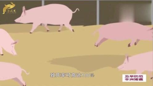 中国动物卫生与流行病学中心:如何正确认识与防控非洲猪瘟