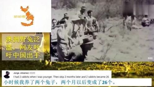 老外看中国:澳大利亚又闹笑话,百亿野兔成灾,外国网友:中国美食有力量