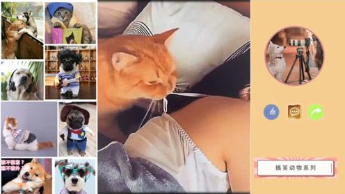 """猫咪:""""善解人衣""""宠物的无理搞笑,超出想象"""