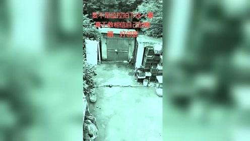 要不是监控拍下这一幕,真不敢相信自己的眼睛,这就是中国好邻居
