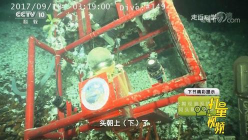 重达一吨的科研设备,在海底竟被拱倒了,这是咋回事?