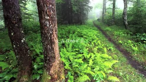 人音版四年级音乐下册第九课 大森林的歌(辽宁)