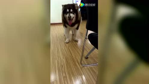 狗狗满屋溜达 视察