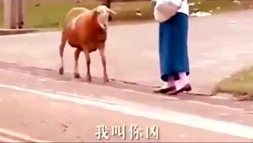 动物搞笑配音!哈哈
