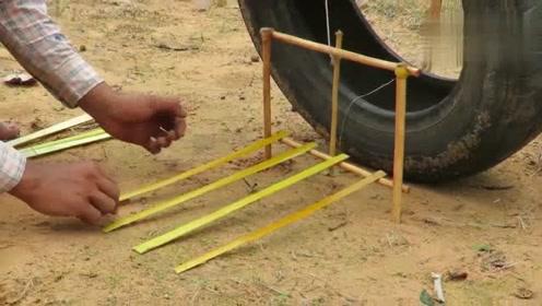 农村小伙野外捕猎,废弃轮胎搭建的陷阱,意外捕获小黑猪