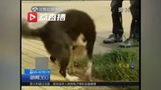 女子遛狗被小区内大狗抓伤,大狗主人围观全程