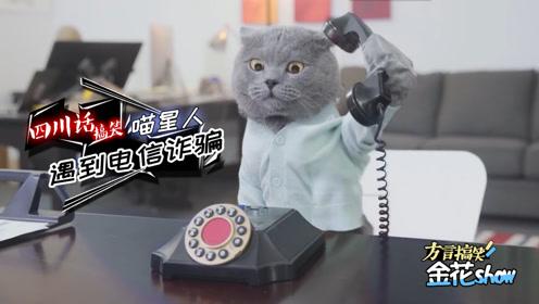 搞笑四川话动物配音:喵星人接到诈骗电话,一