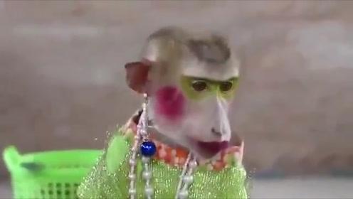 国外奇葩大妈,为小猴子化妆,猴子:以后天天给我打扮漂亮点