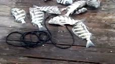 赶海:男子海边捕鱼,一网下去就是十几条,再一网下去又是十几条!