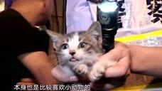 警务纪实:被卡车子里的小猫被救出了,警察还要去打针!