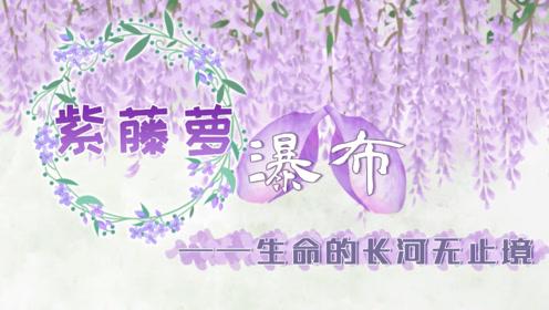 七年級語文下冊17 紫藤蘿瀑布(宗璞)