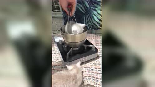 搞笑动物舌尖上的猫咪!太搞笑了