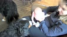 两只牧羊犬和小baby第一次见面,兴奋不已