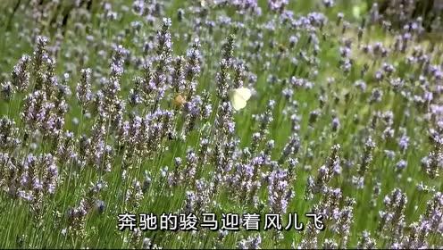 乌兰图雅《我的大草原》,草原歌曲,景美歌美
