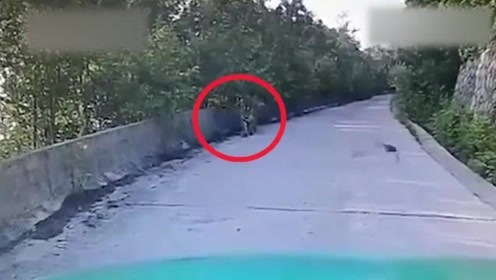 """路遇""""攔路虎""""!琿春一的哥開車偶遇東北虎,對視20分鐘"""