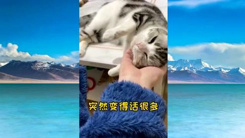假孕争宠心机猫这次真的有了, 看完视频,叫人觉得这小猫咪太可爱了!