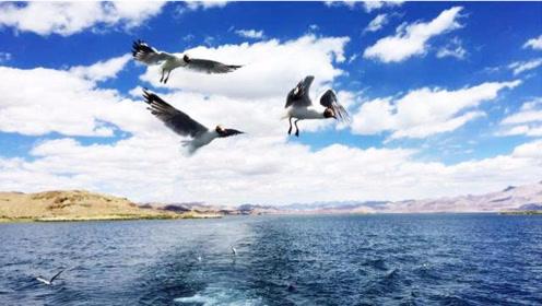 在班公湖与棕头鸥亲密接触,这样的徒步西藏游够有趣!