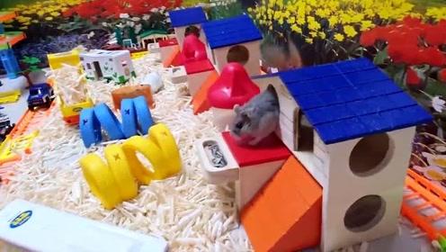 萌萌哒,三只可爱的仓鼠在游乐园玩耍