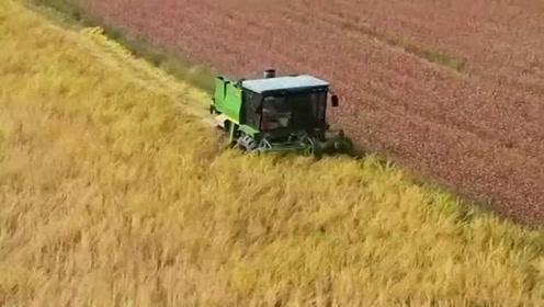现在的农民都太轻松了,种地全都机械化,农民都不用出大力了!