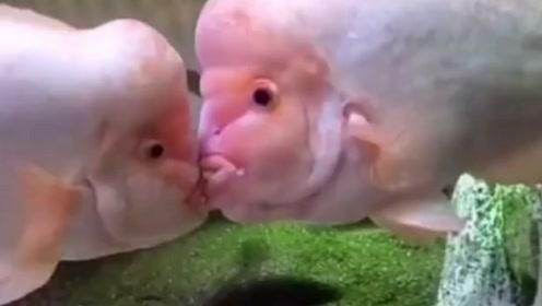动物搞笑配音,你两在秀恩爱我就要拆散你们