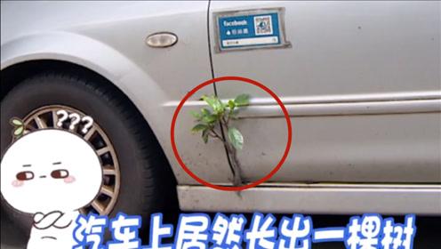 """车门长出小树苗,车主悉心呵护3年:车坏了没事,动树就""""拼了"""""""