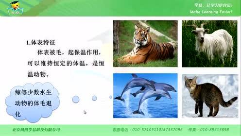 新版八年级生物上册5.1.7 哺乳动物
