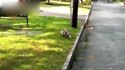搞笑动物集锦,你见过如此奇葩的宠物吗?