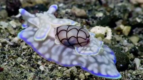 你知道海底里的蜗牛长什么样吗