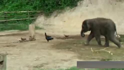 最新经典动物搞笑视频集锦,笑死人了