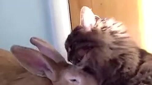 奇葩动物大盘点 戏精动物们的搞笑日常