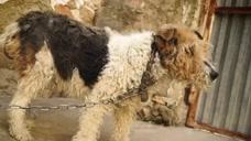 流浪狗被主人抛弃,拴起来动弹不得,走近一看令人心疼!
