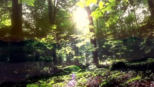 放松舒缓身心的轻音乐《生命之光》