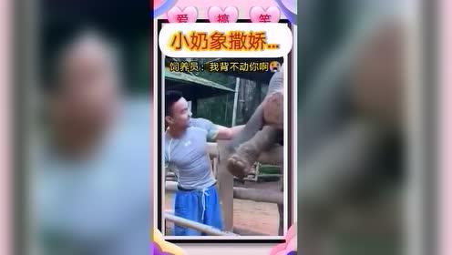 搞笑视频: 动物也调皮
