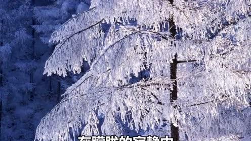 四年級語文下冊11 白樺