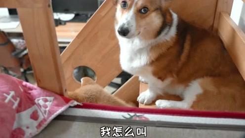 狗子竟然上了我的床,这波操作让人情何以堪?