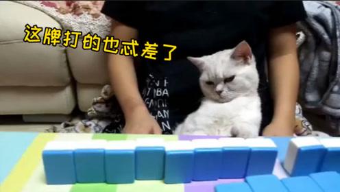 搞笑视频: 这牌打的也忒差了,猫都看不下去了
