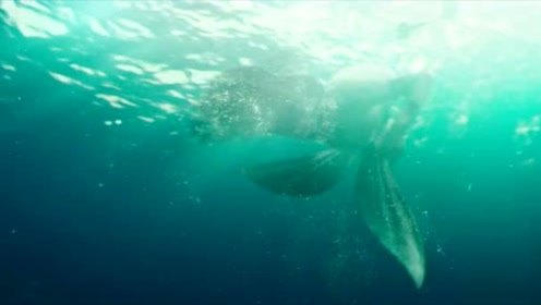褪去层层束缚,美人鱼露出本来面貌,这尾巴太迷人了!