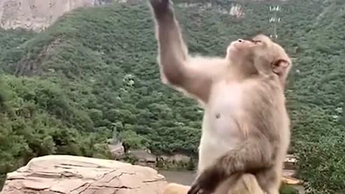 景区里小猴子与游客玩得不亦乐乎,看到他搞怪