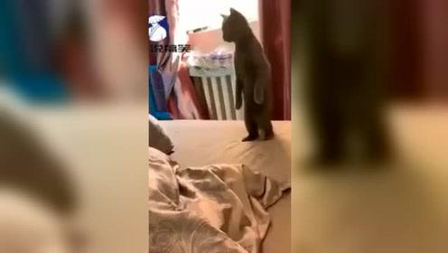 一进门就看到这一幕,啥情况这是,网友:这猫